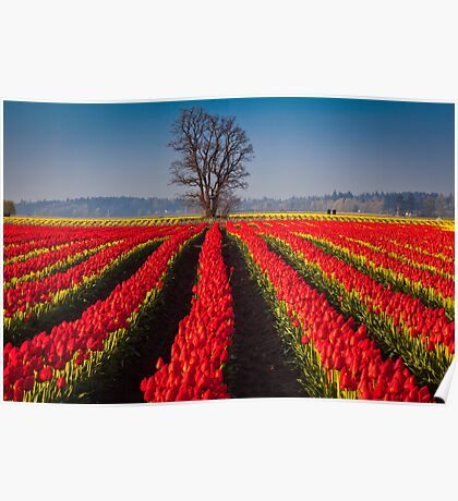 Tree in Sea of Red Poster