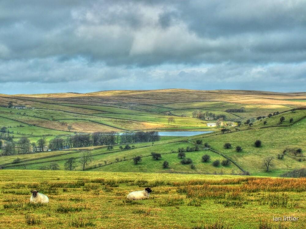 The fields of Barley by ian littler