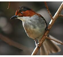 Brown and White Bird Photographic Print