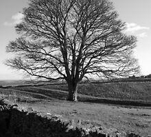 Lone tree by redown