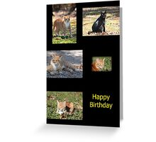 Happy Birthday Cats Greeting Card