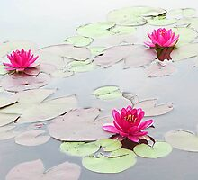 Water Lilies in the Morning by Michael Taggart
