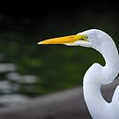 Egret Profile by George Lenz
