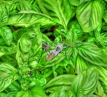 Bugs and Basil by bannercgtl10
