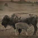Bison 9 by Miles Glynn