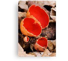 Scarlet Elf Cups Canvas Print