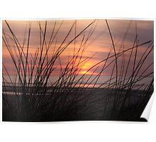 sunset reeds Poster