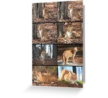 Orange Tabby Collage Greeting Card