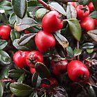 Red Berries by jorafc