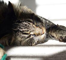 Sunbathing Moggie by dgscotland