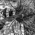 Dark Reflections by Michael  Moss