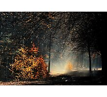 When the light is playing in the forest Photographic Print