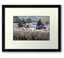 Herding sheep at Castlepoint. Framed Print