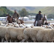 Herding sheep at Castlepoint. Photographic Print