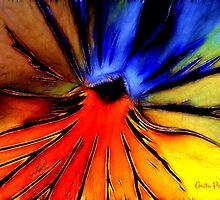 Far Out Pansy by Anita Pollak
