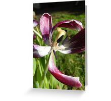 Purple Joy Greeting Card