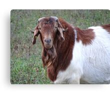 Who you callin' an old billy goat? Canvas Print