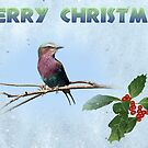 Lilac Breasted Roller - Christmas Card by Jennifer Sumpton