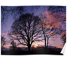 Woodland Edge Sunset Poster