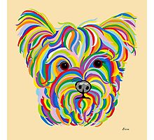 Yorkshire Terrier - YORKIE! Photographic Print
