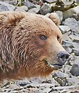 Katmai Bear Portrait by Graeme  Hyde