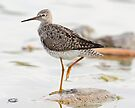 One-legged Yellowlegs by Todd Weeks