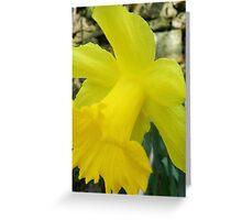 Oh Daffodil Greeting Card