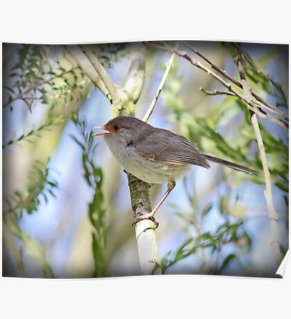 ~ Song Bird ~ Poster