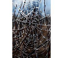Frosty Web Photographic Print