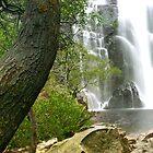 Mackenzie Falls by Sam Sneddon