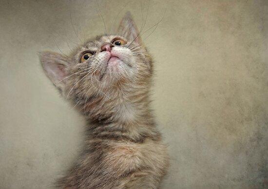 I Smell Tuna by Pat Abbott
