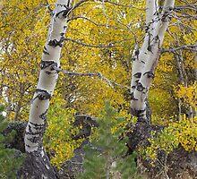 Autumn Arrives  by Richard Thelen
