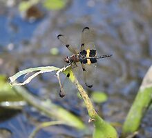 Dragonfly Buzzing By by JessicaJade