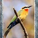 White Fronted Bee Eater II - Birthday Card by Jennifer Sumpton