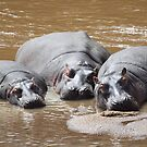 Hippos in The Mara by Carole-Anne