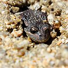 Toad in a hole by Steve Read