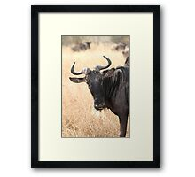 Wildebeest Portrait #1 Framed Print