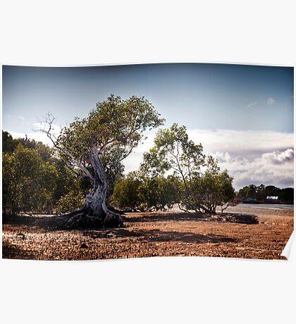 Old Man Mangrove Poster