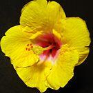 Tropical Splendour by Rocksygal52