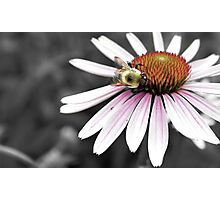 Mono Color Bee Photographic Print
