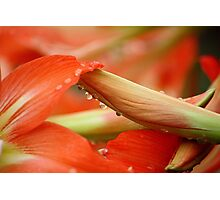Drops of Beauty... Photographic Print