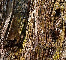 Stringy Bark - Allendale Gardens, Tasmania by clickedbynic