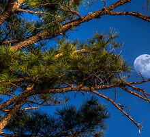 Pining for the Moon by Bob Larson