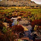 Mt. Buffalo (Corral Peak Walk) by Emma  Gilette