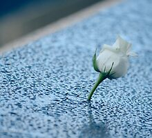 September 11 Memorial South Pool - White Rose | New York City, New York by © Sophie W. Smith