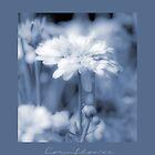 Blue Cornflower by Karen Lewis