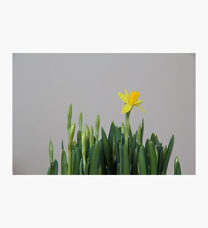 First Bloom Photographic Print