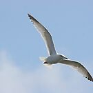 FLYING SEAGUL by andysax