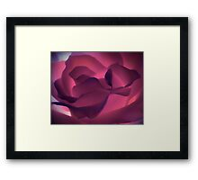 Candy Rose Framed Print