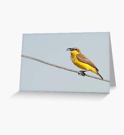 Momma Sunbird Greeting Card